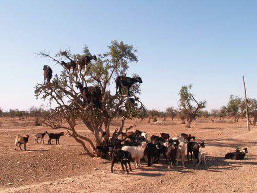 Agadir day trip to sahara Desert (small desert)