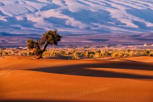 Agadir day trip to sahara Desert(small desert)